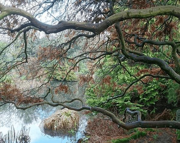 homestead park pond