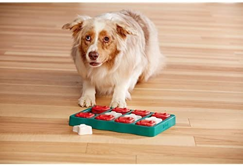 Collie dog playing with a feeder puzzle in on laminate flooring